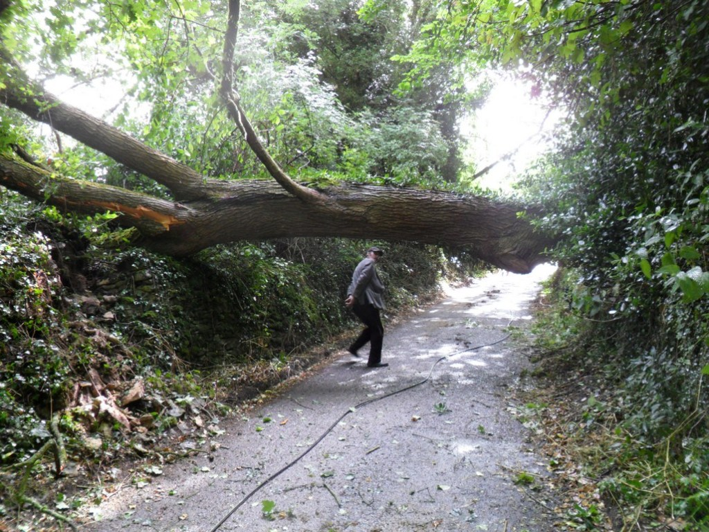 "Fallen Tree in Hawks Lane. County Council gang took one look and went home. Richard Handy had to sort it out, ""Brave"" locals were driving under it!"