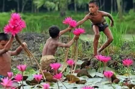 蓮の花を摘む少年