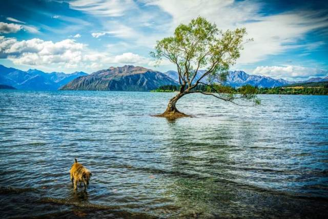 Wanaka Itinerary - Lake Wanaka