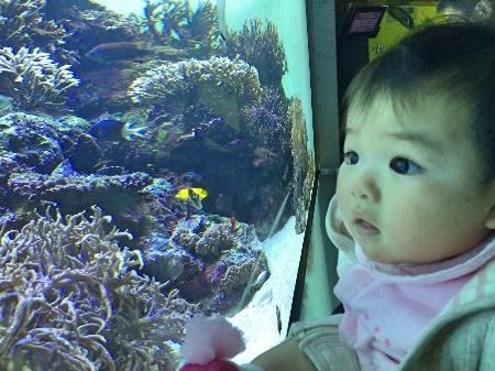 aquarium032402