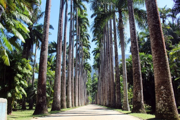 Botanischer Garten Rio de Janeiro_MS Sirena von Oceania Cruises (30)