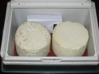 Two 0.5 kg cumin & plain Gouda's aging in small drinks cooler on ice block.