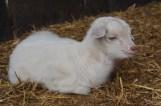2 days old kid
