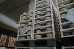 maturing room of Gligora Dairy