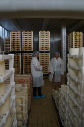 tour in cheese factory of Gligora Dairy