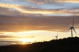 Albany's windmills