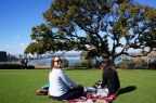 Picnic in Kings Park