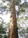 me climbing up the Gloucester Tree