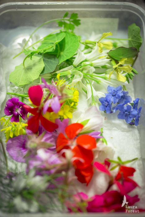 Flowers & herbs from our home garden
