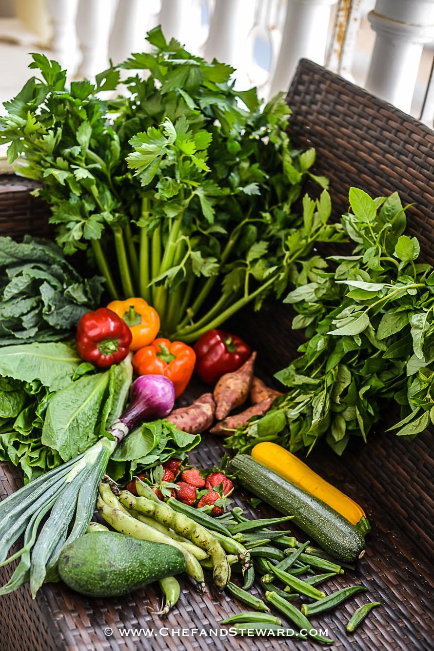 greenheart-organic-farms-dubai-uae-farm-tour-17.jpg