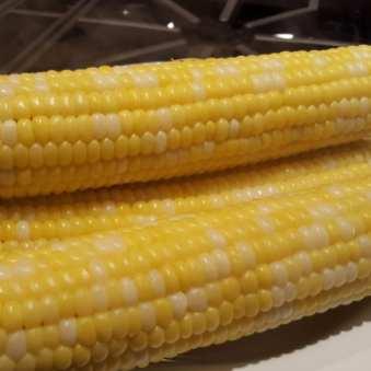 Balsam Farms Bi-color sweet corn