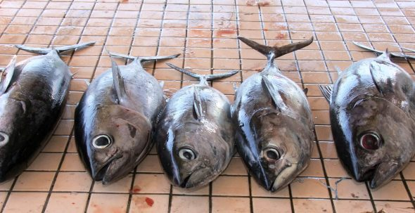 Fresh tuna, Saint Lucia.