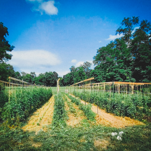rendezvous farm from mike tholis in frederick maryland