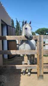 caballo manso riera