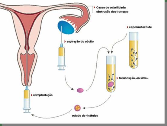 Fertilização