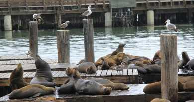 В столицу Перу возвращаются птицы и морские животные