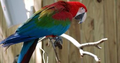 Из женского монастыря сбежал выучивший молитвы попугай