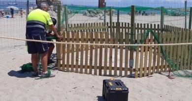 В Испании черепахи начали откладывать яйца на пляжах Коста-Брава