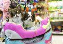 Выявлена опасность собак из зоомагазинов