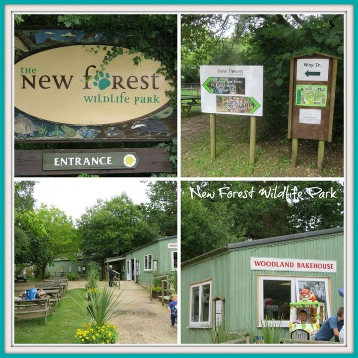 New Forest Wildlife Park