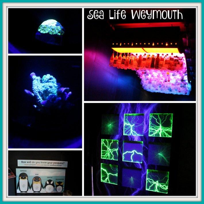 Sea Life Weymouth