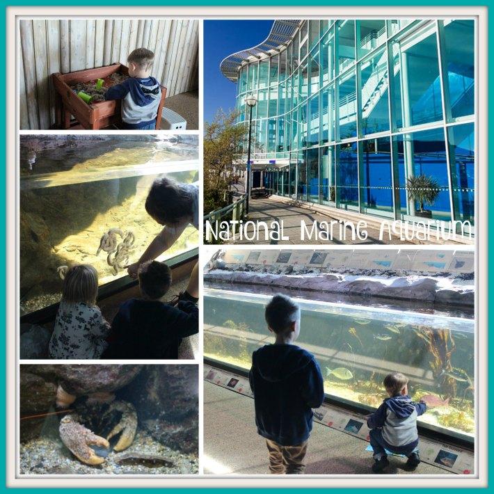 national-marine-aquarium