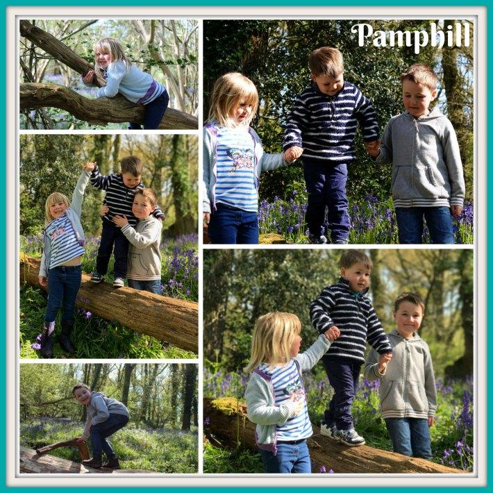 Bluebell Wood - Pamphill