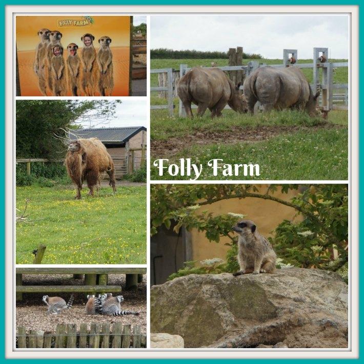 Folly Farm Animals