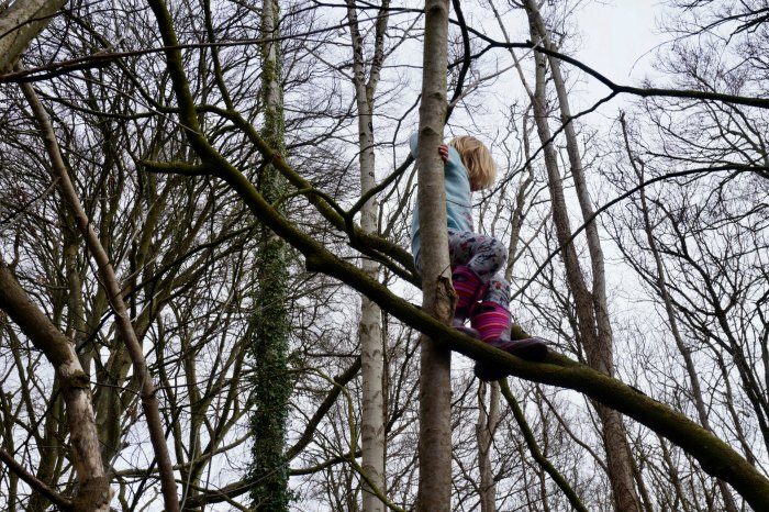 Tree Climbing Kingston Lacy