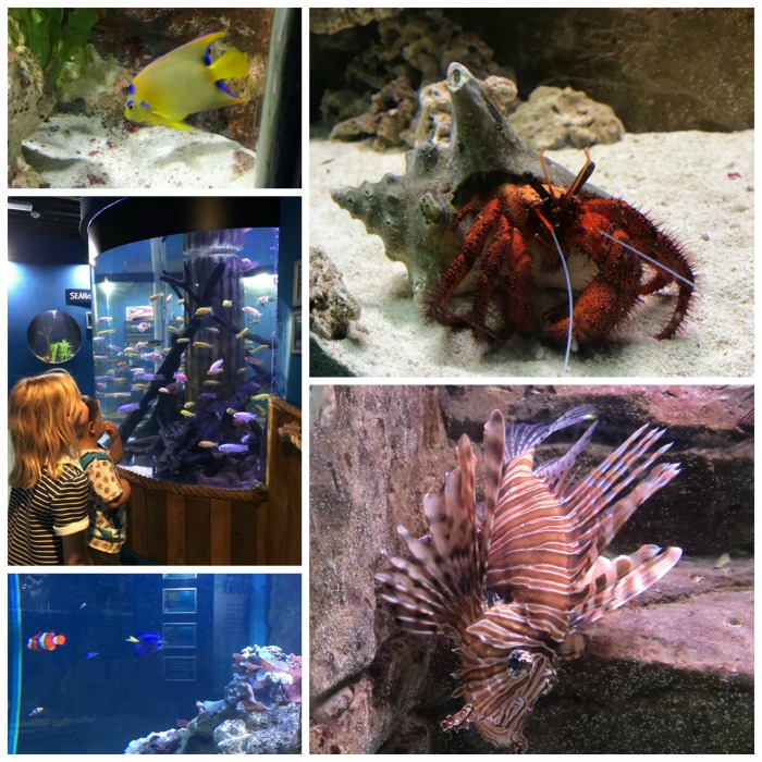 Blue Reef Collage