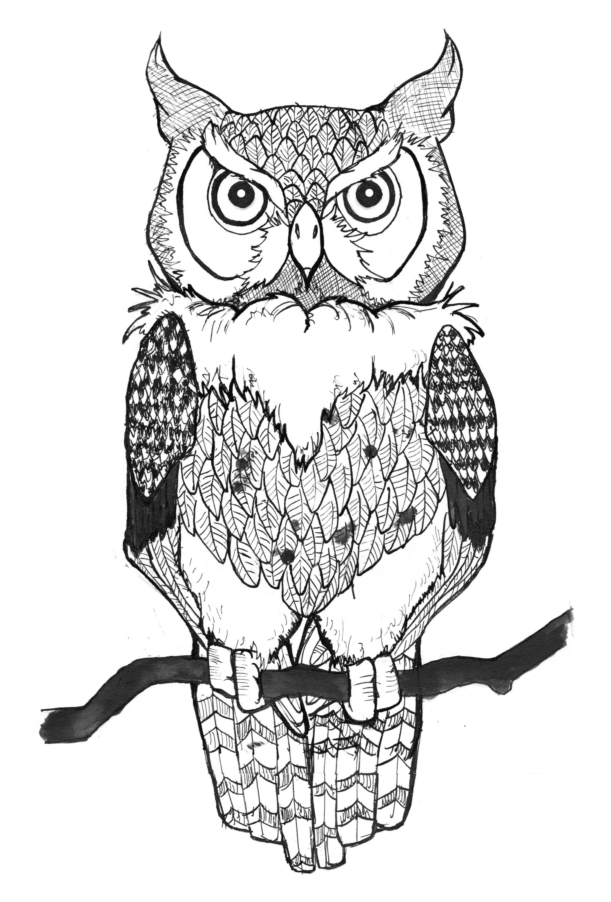 Drawing An Owl Jak Narysowa Sow 3