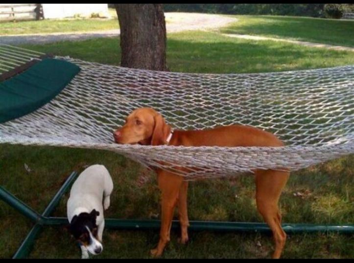 A dog's legs are stuck through a hammock made of net. The dog cannot get out.