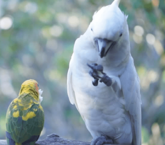 small and large parrot