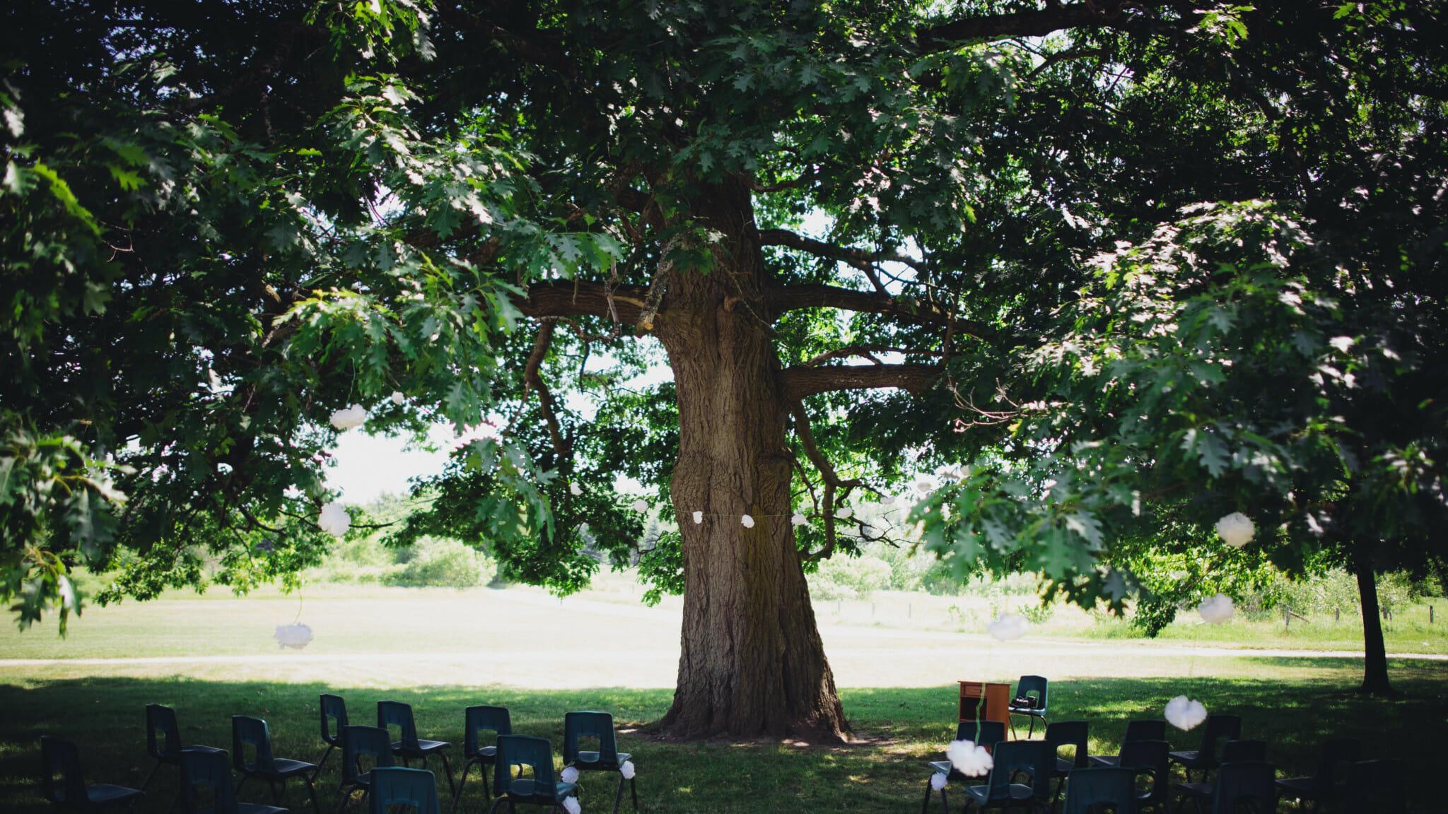 outdoor camp wedding ceremony under big tree in mansfield