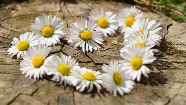 Découvre la fleur qui est dans ton coeur 1