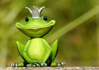 Une grenouille dans vos rêves ? 15