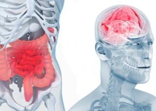 L'intestin : cerveau des émotions ? 4