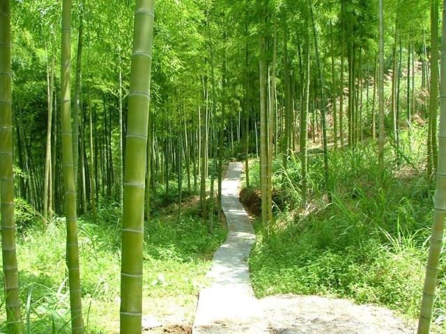 La fable de la fougère et du bambou 1