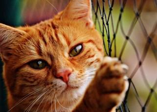 Les gens qui aiment les chats 13