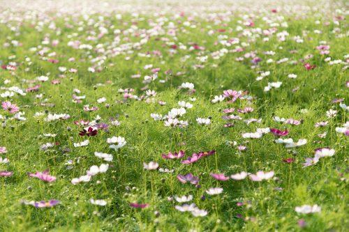 Slow flower : des fleurs locales et de saison