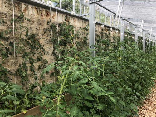 permaculture capitaliser sur les forces système