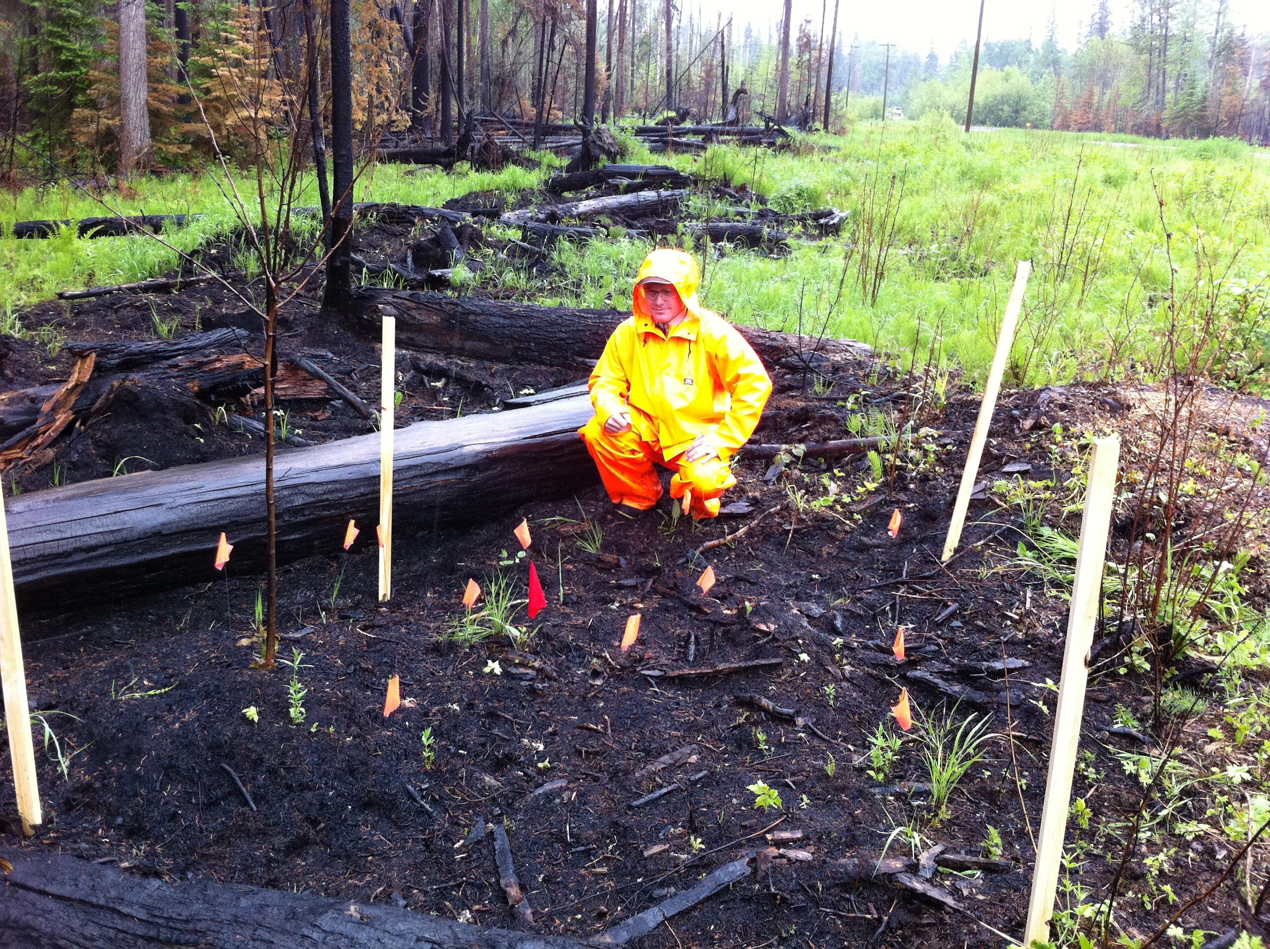 Burned area of arson wildfire investigation