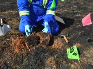 Arsonous Wildfire Investigation