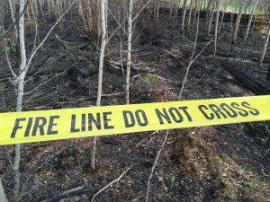 Fire line at wildfire investigation site