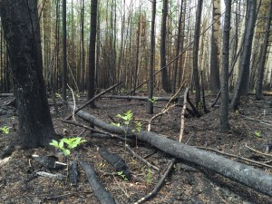 Result of a wildfire