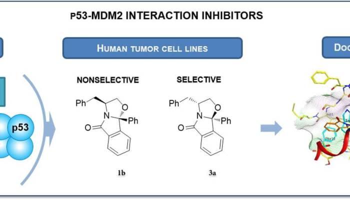 Oxazoloisoindolinones inhibit p53–MDM2 interaction