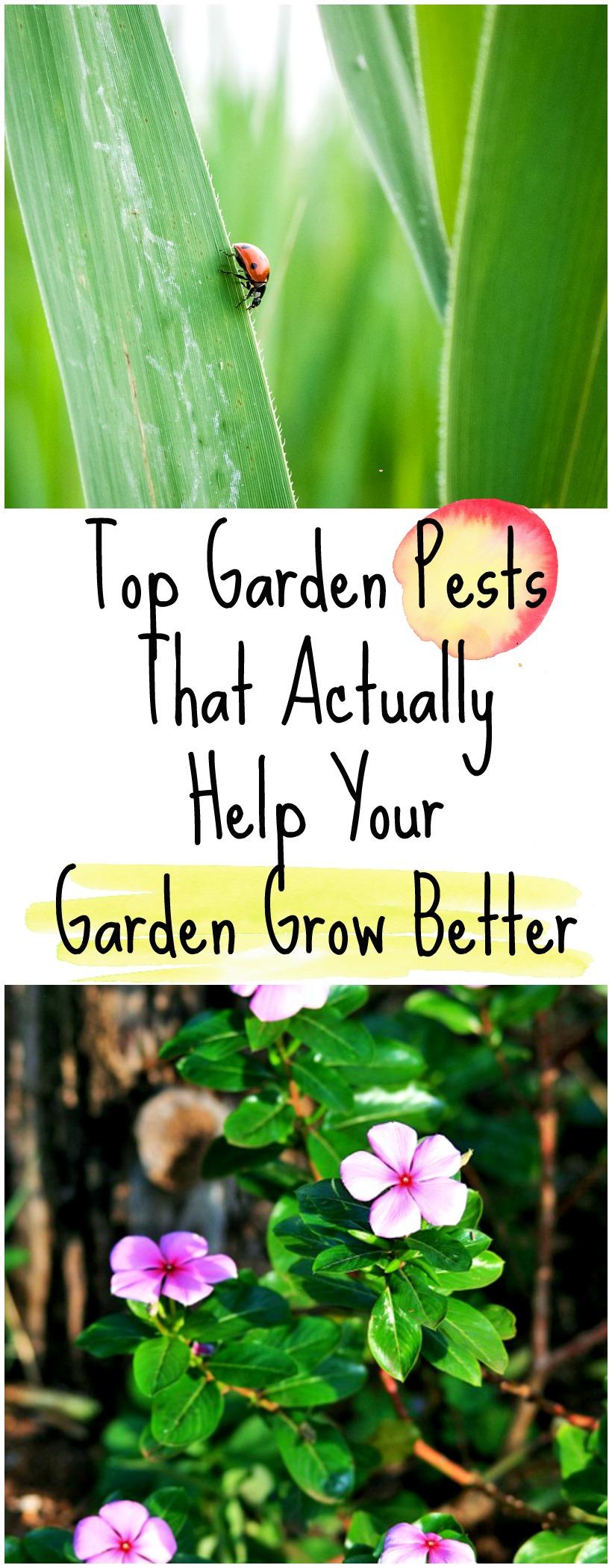 Top Garden Pests That Actually Help Your Garden Grow Better