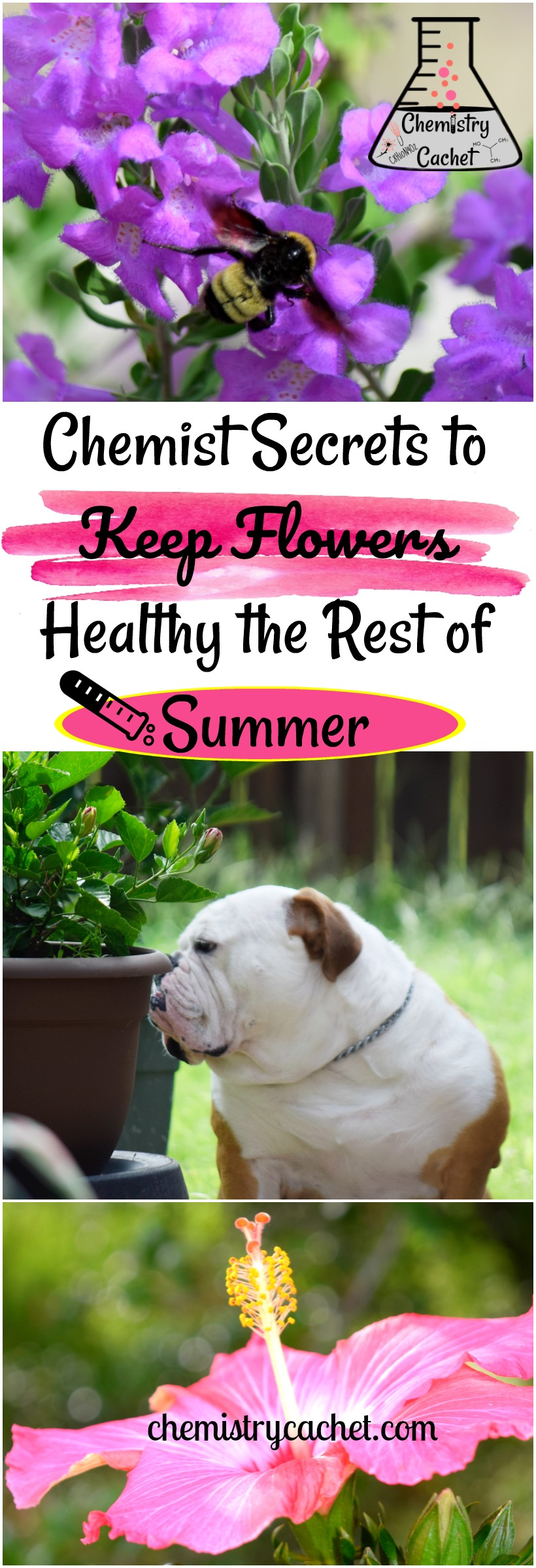 Do your flowers look bad in the summer Here are Chemist Secrets to Keep Flowers Healthy the rest of this summer!! Awesome summer tips on chemistrycachet.com