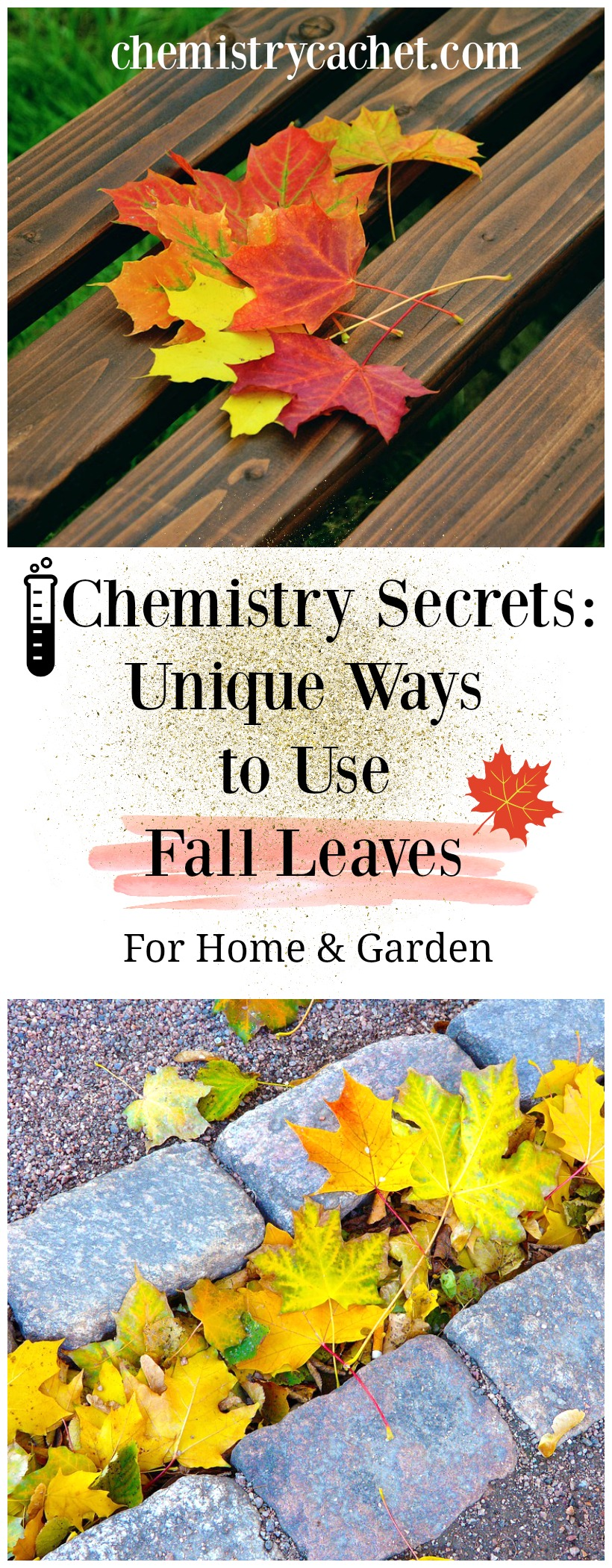 Chemistry Secrets Unique Ways to Use Fall Leaves. Use fall leaves for your garden, compost, around the home, and more on chemistrycachet.com