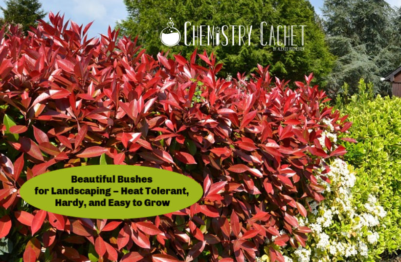 Beautiful Bushes For Landscaping Heat Tolerant Hardy And Easy